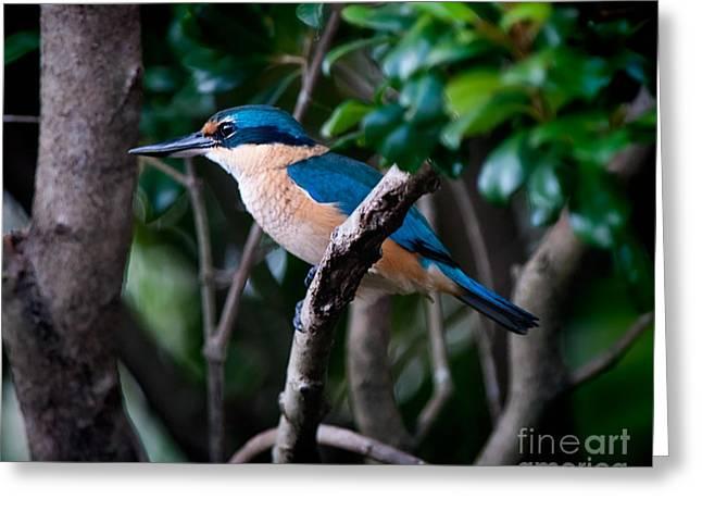 Sacred Kingfisher Greeting Card by Melody Watson