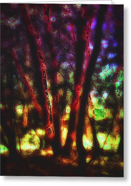 Sacred Trees - The Gathering  Greeting Card by Mimulux patricia no No