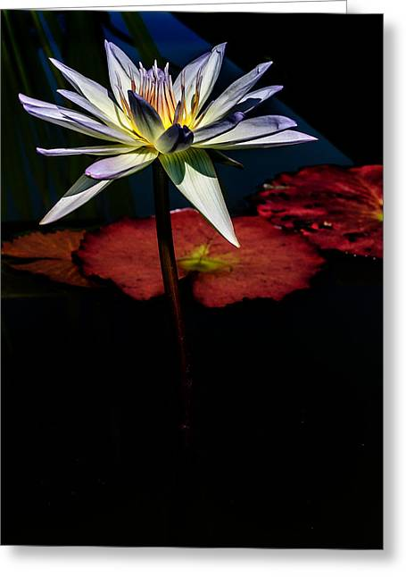 Sacred Water Lilies Greeting Card by Louis Dallara