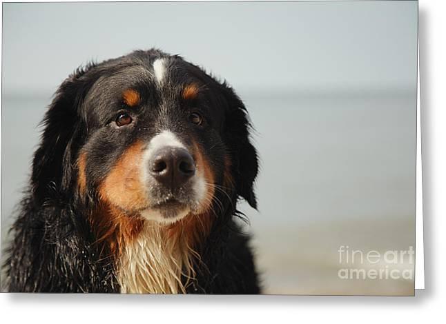 Sad Dog Looks At Camera Greeting Card by Aleksey Tugolukov