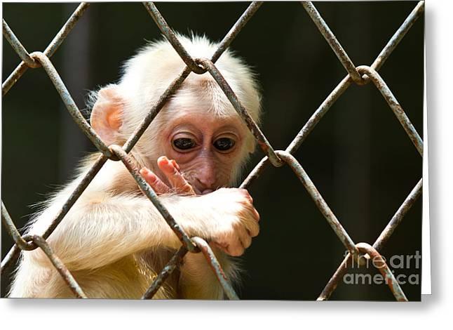 Sad Little Monkey  Greeting Card