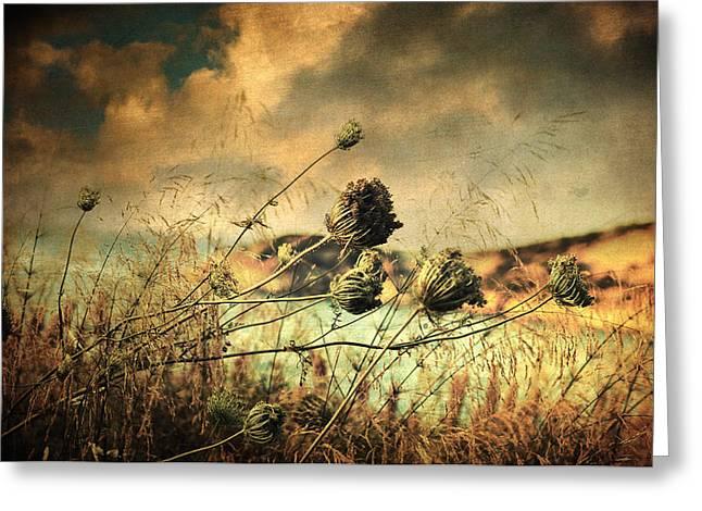 Sad Song Of The Wind Greeting Card by Taylan Apukovska