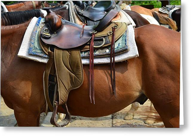 Saddle Up Partner Greeting Card by Frozen in Time Fine Art Photography