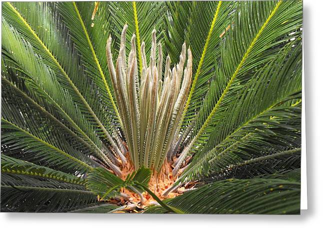 Sago Palm In Bloom Greeting Card by Rebecca Cearley