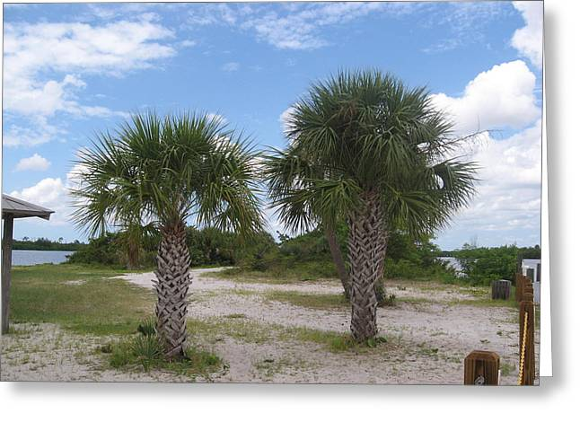 Sago Palms On The Beach Greeting Card