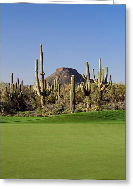 Saguaro Cacti In A Golf Course, Troon Greeting Card by Panoramic Images