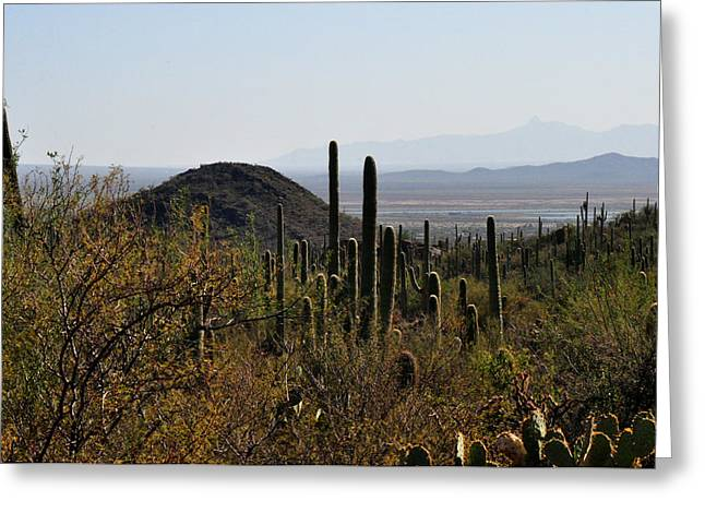Saguaro Cactus And Valley Greeting Card by Diane Lent