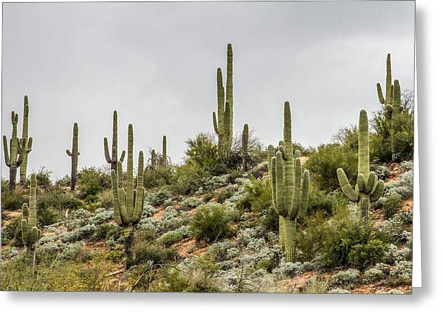 Saguaro Cactus  Greeting Card by Bill Gallagher