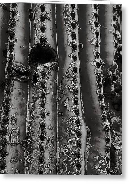 Saguaro Cactus Black And White 1 Greeting Card