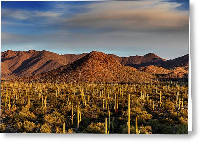 Saguaro Cactus Dominate The Landscape Greeting Card by Chuck Haney