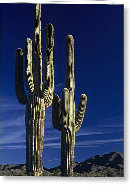 Saguaro Cactus Sunset Arizona State Usa Greeting Card