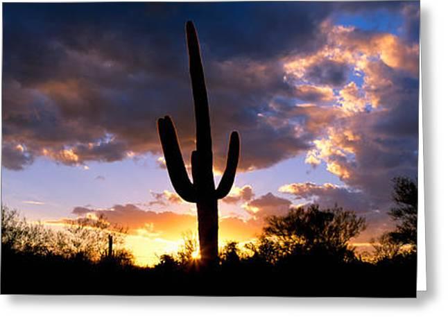 Saguaro Cactus, Sunset, Tucson Greeting Card by Panoramic Images