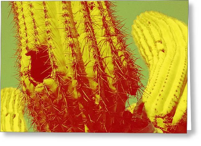 Saguaro Celebration I Greeting Card