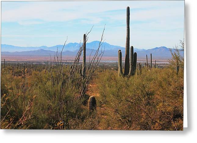 Greeting Card featuring the photograph Saguaro Desert by Alicia Knust
