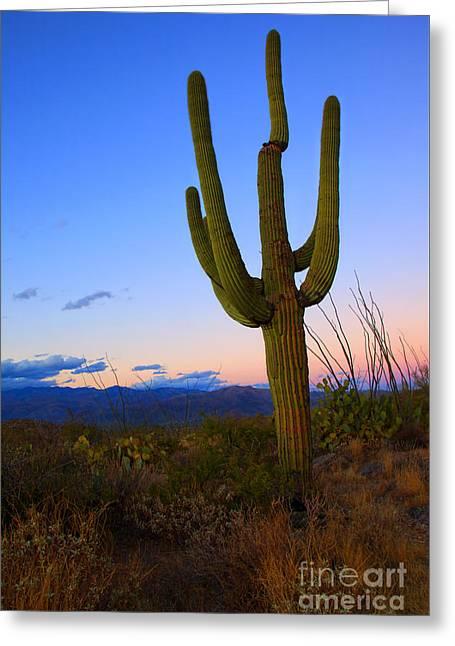 Saguaro Dusk Greeting Card