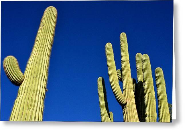 Saguaro National Forest Tucson Az Greeting Card by Diane Lent
