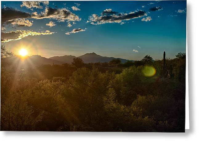 Greeting Card featuring the photograph Saguaro National Park by Dan McManus