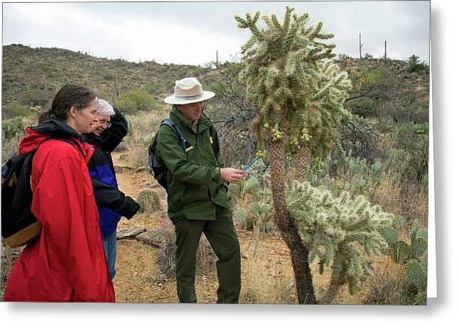 Saguaro National Park Tourism Greeting Card