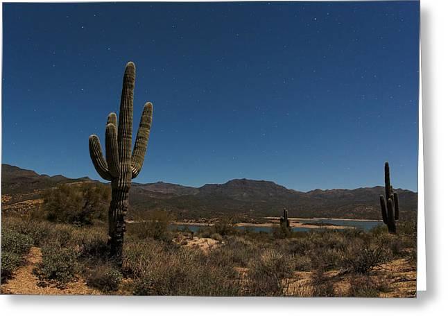 Saguaro Near Bartlett Reservoir Greeting Card