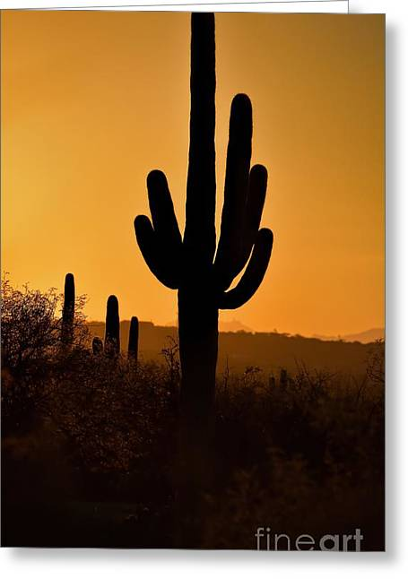 Saguaro Silhouette Sunset Greeting Card by Henry Kowalski