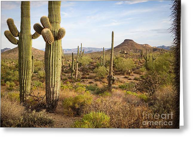 Saguaro Twins Greeting Card