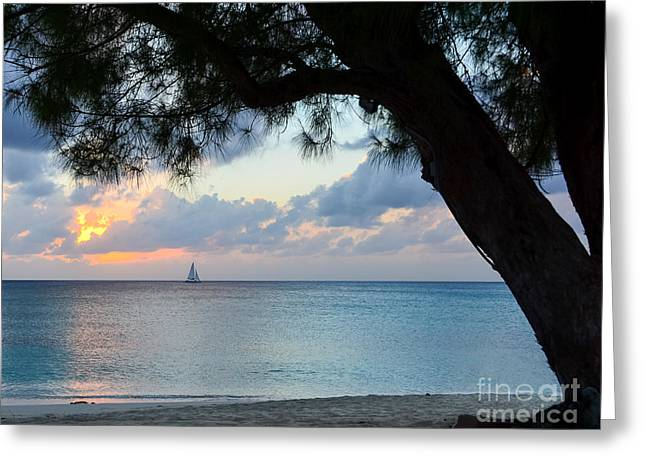 Sail Into The Sunset Greeting Card by Karen English