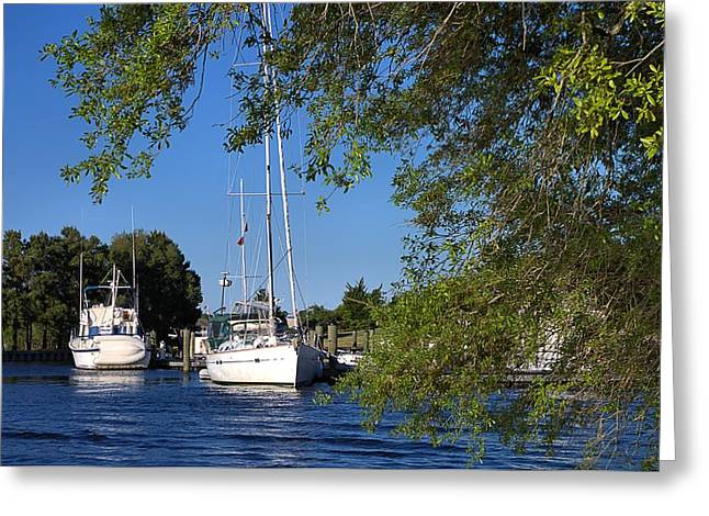 Sailboat Through Trees Greeting Card