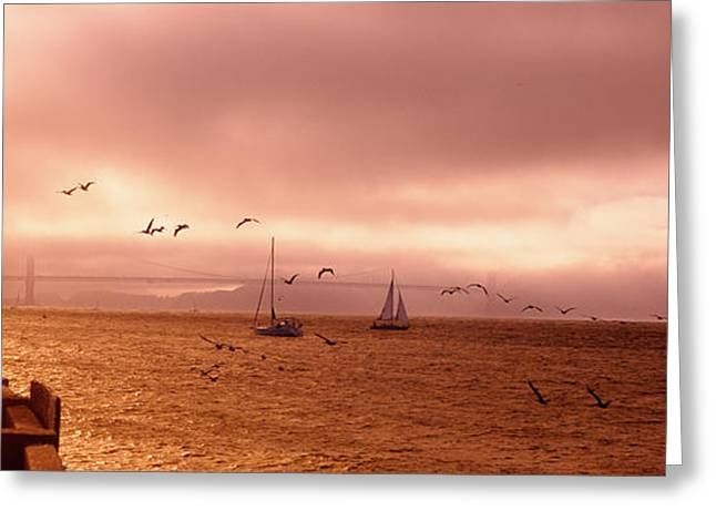 Sailboats In The Sea, San Francisco Greeting Card by Panoramic Images