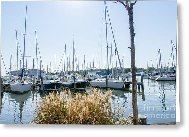 Sailboats On Back Creek Greeting Card