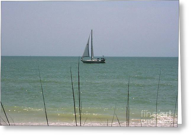 Greeting Card featuring the photograph Sailing In The Gulf by D Hackett