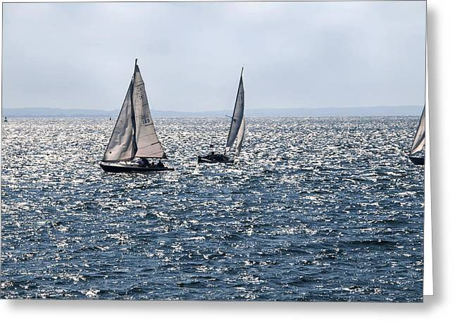 Sailing In The Harbor Greeting Card