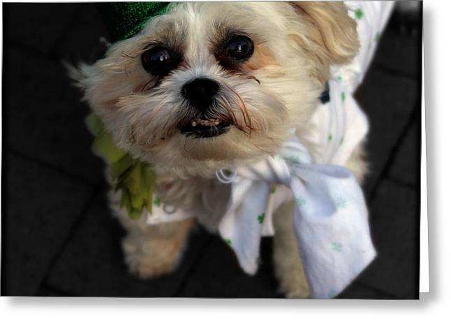 Saint Patrick's Day  Greeting Card by Steven Digman