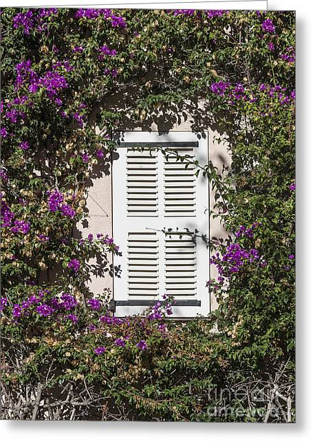 Saint Tropez Window Greeting Card by John Greim