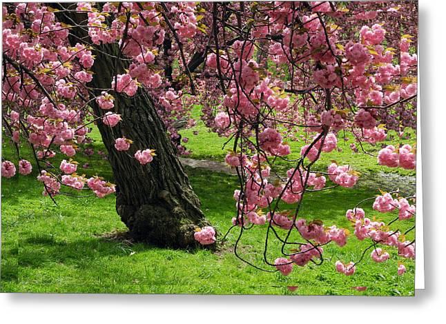Sakura Blossom Greeting Card by Yue Wang
