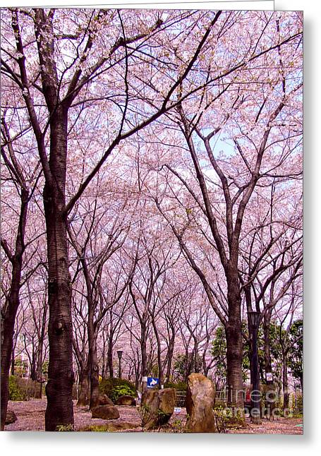 Greeting Card featuring the photograph Sakura Tree by Andrea Anderegg