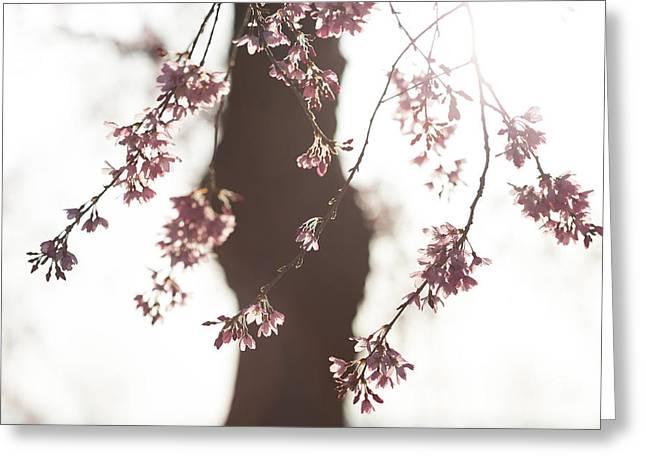 Sakura Greeting Card