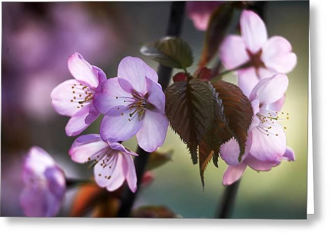 Sakura Greeting Card by Vetre Antanaviciute Meskauskiene