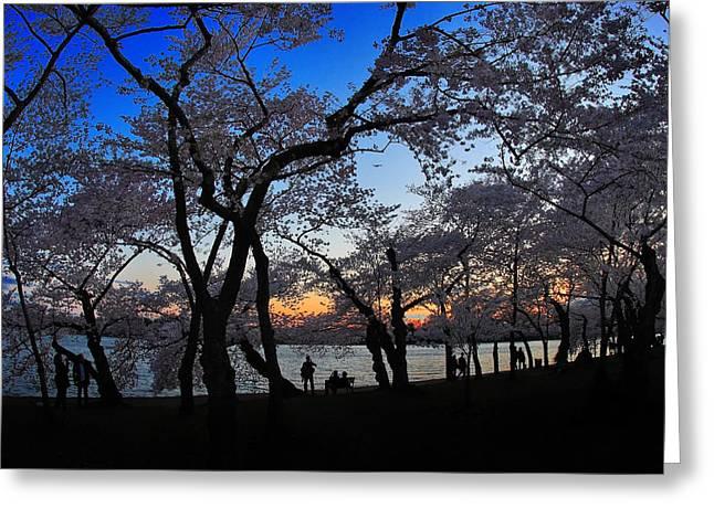 Sakura's Twilight Greeting Card by SCB Captures