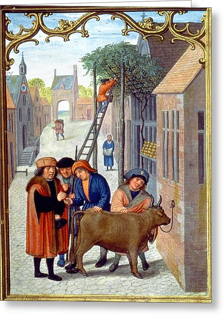 Sale Of A Bull, C1515 Greeting Card