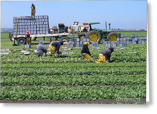 Greeting Card featuring the photograph Salinas Farmworkers by James B Toy