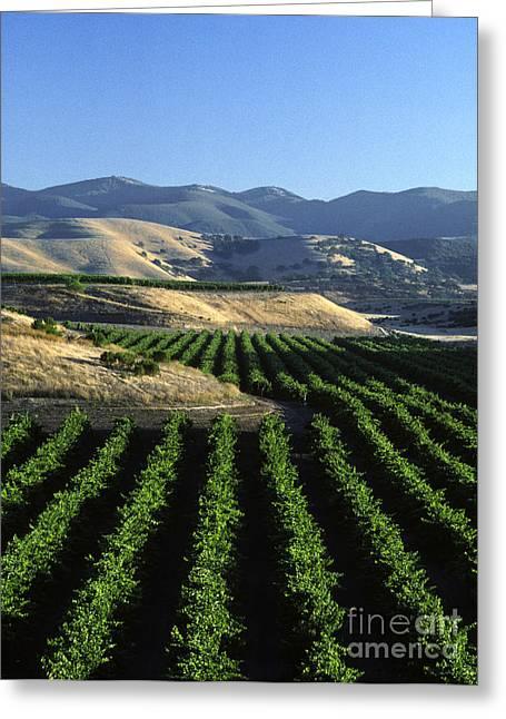 Salinas Valley Vineyard Greeting Card by Craig Lovell