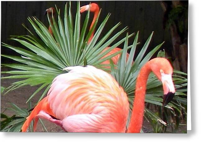 Salmon Flamingos Greeting Card