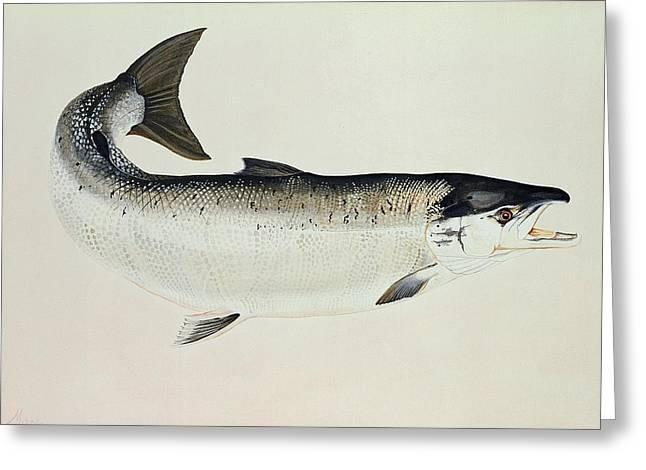 Salmon Greeting Card by Jeanne Maze