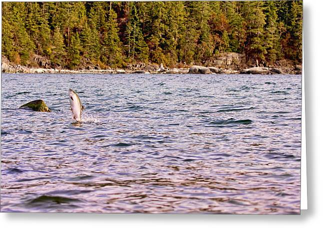 Salmon Jumping In The Ocean Greeting Card by Peggy Collins