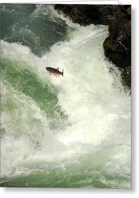 Salmon Run 5 Greeting Card by Mamie Gunning
