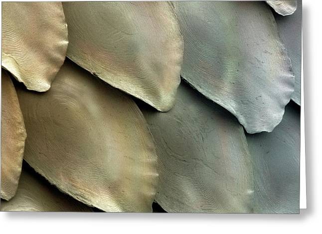 Salmon Scales Greeting Card