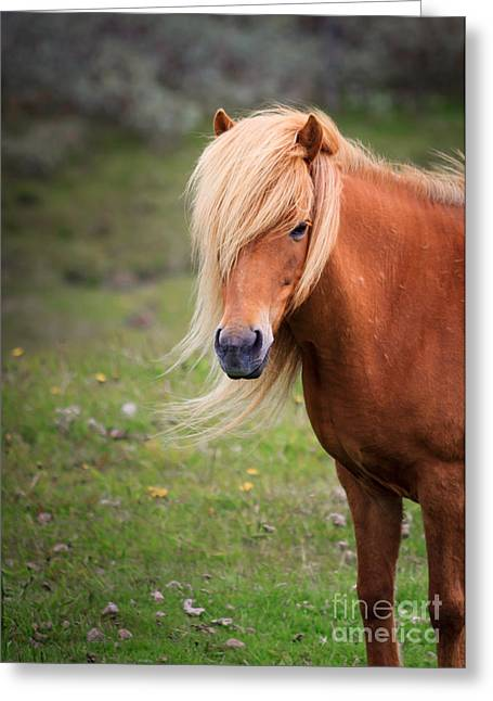 Greeting Card featuring the photograph Salon Perfect Pony by Peta Thames