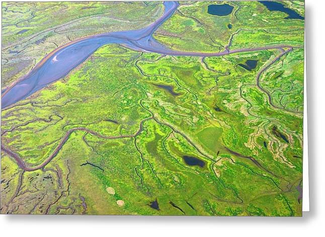 Salt Marshes From The Air. Greeting Card by Mark Williamson