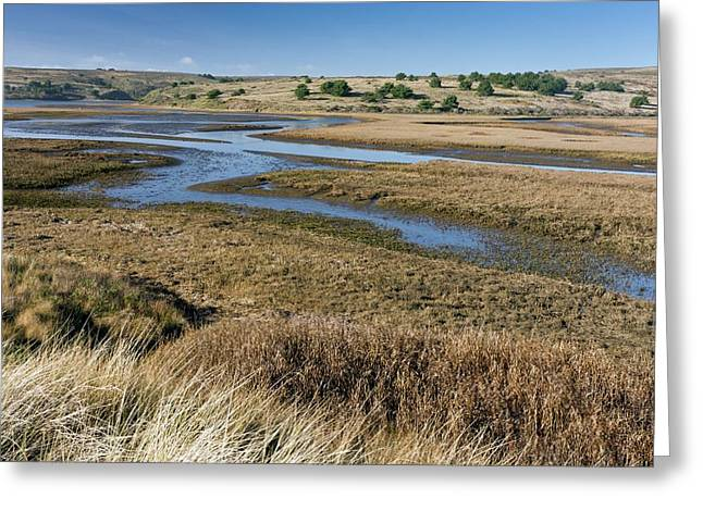 Saltmarshes Greeting Card by Bob Gibbons