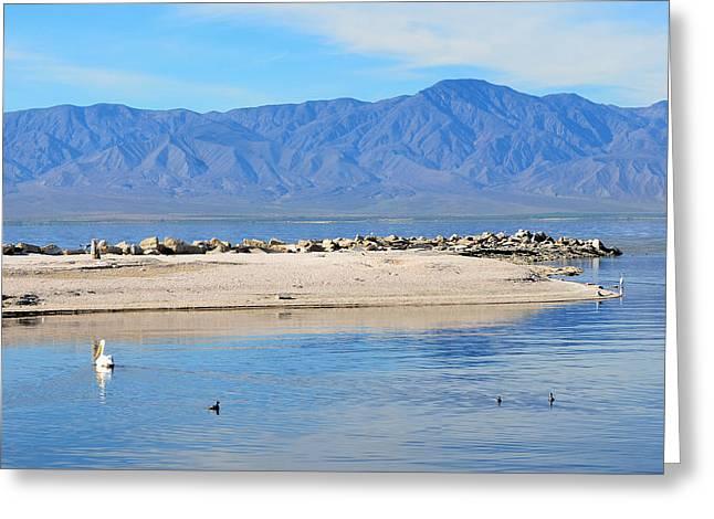 Salton Sea 2 Greeting Card by Fraida Gutovich